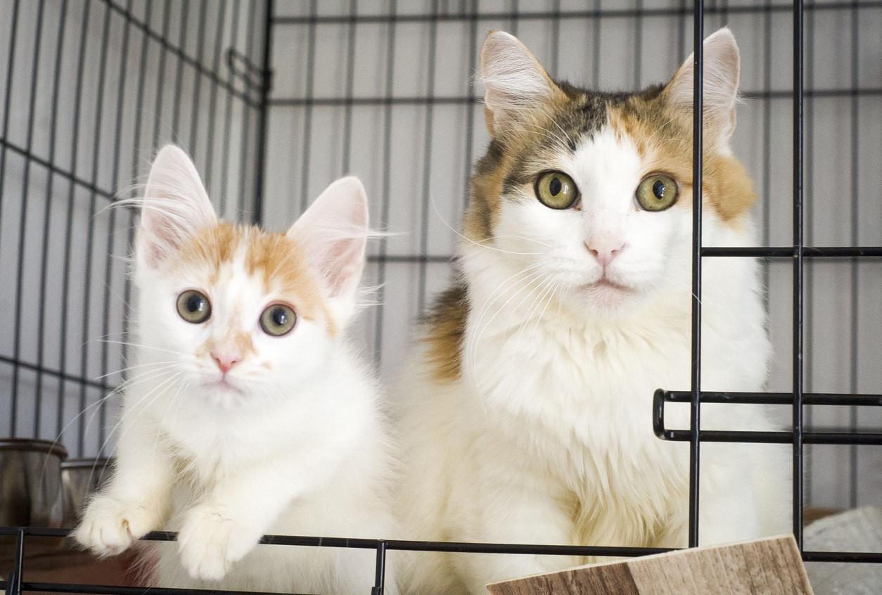 Пятничная кошка Маруся – гений общения!