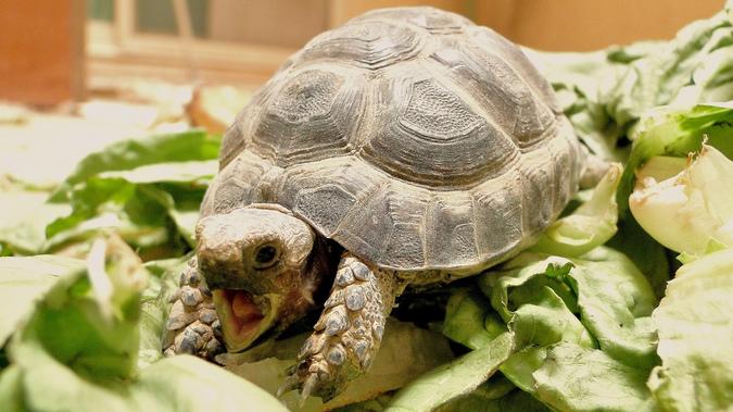 Житель Миасса год хранил тело черепахи в холодильнике, чтобы отсудить за ее смерть 600 рублей