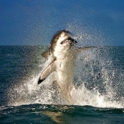 5 странных фактов, которые вы не знали про акул