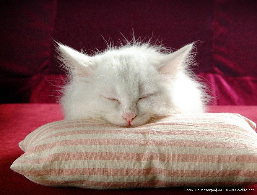 Популярное на Google+ : соответствие возраста домашней кошки и человека