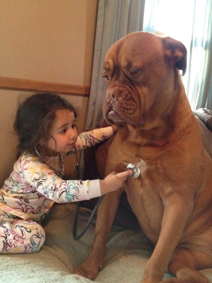 Сейчас будем тебя лечить  дружба, ребенок, собака