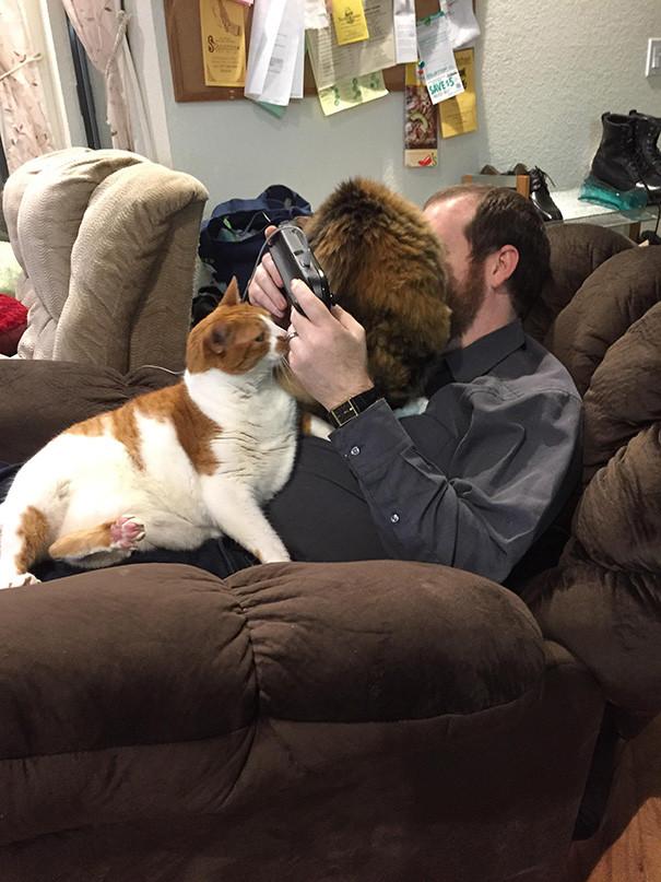 Коты, которые и не подозревают, что у вас есть личное пространство коты, прикол, фото