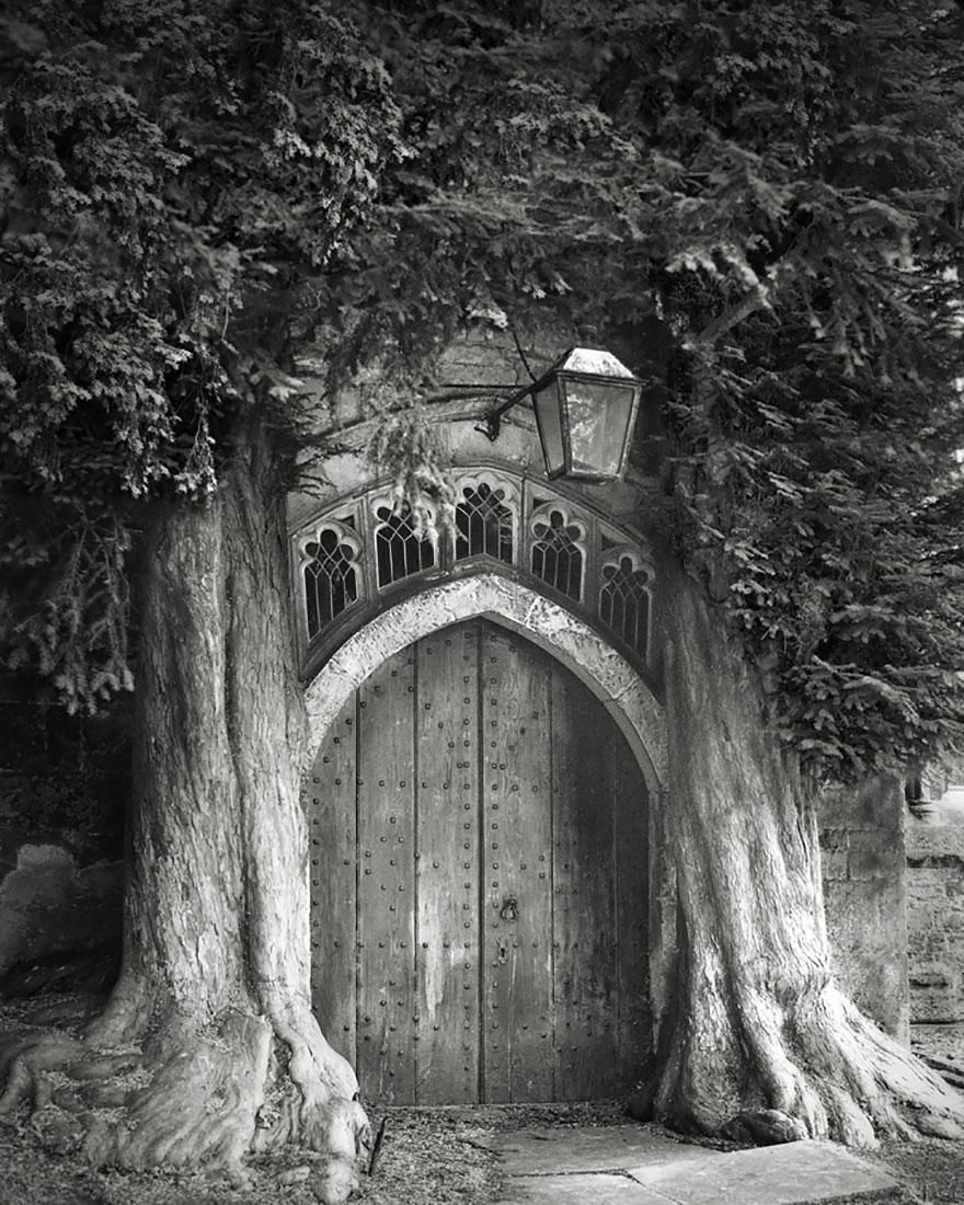 Деревья древние как мир в фотографиях из 14-летнего путешествия-6