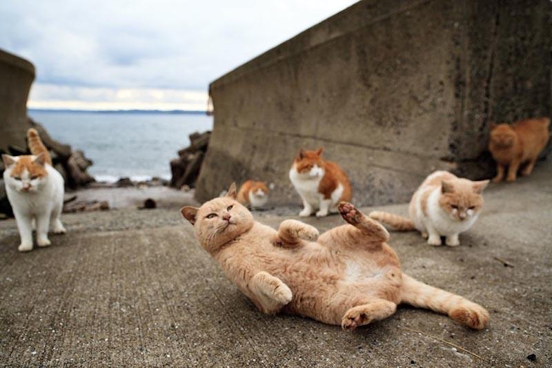 cats01 10 мест, в которых обожают кошек