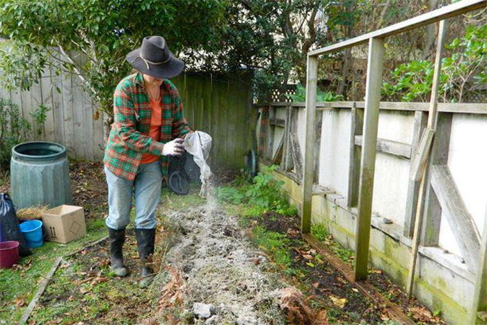Бабушкины советы по применению золы в саду и огороде