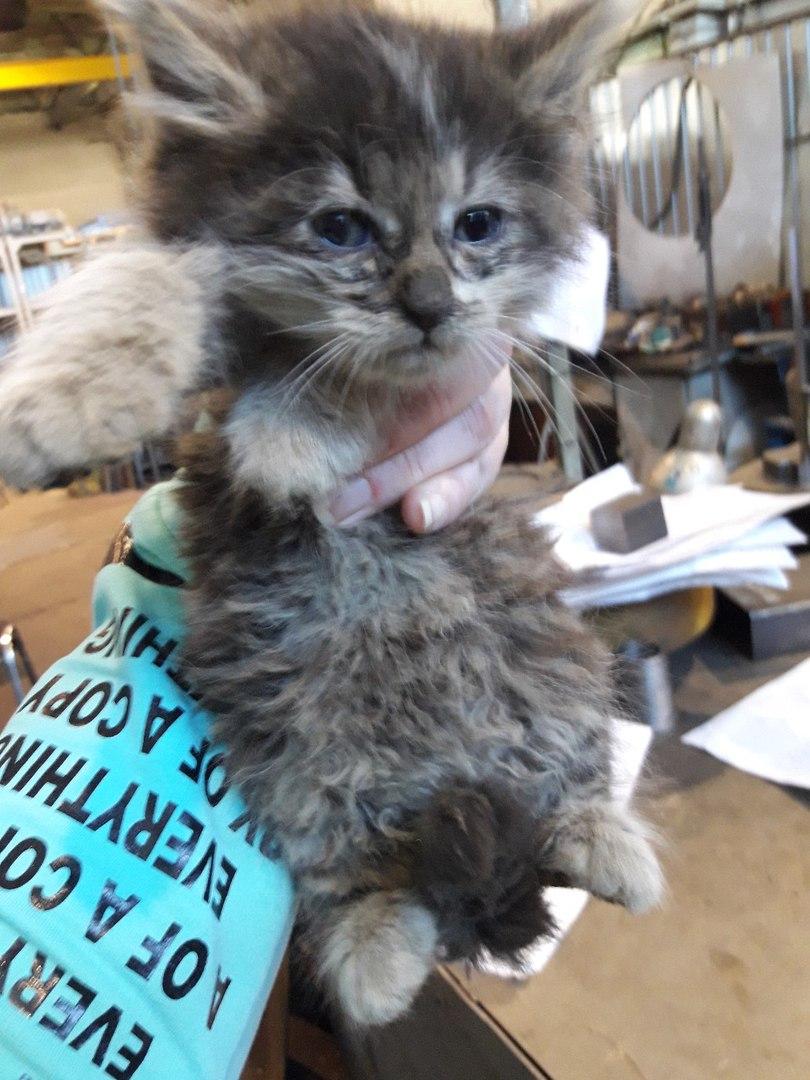 Кошка родила в рабочем цеху… С самым тощим котенком случилось нечто удивительное