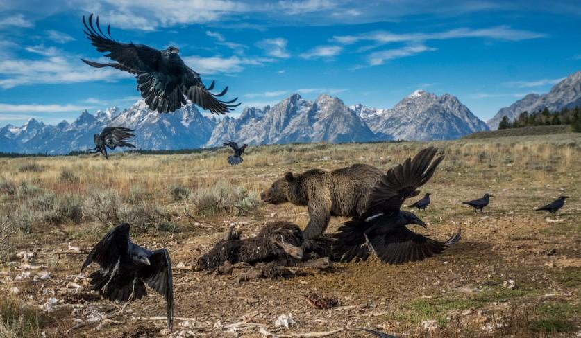 Животные на охоте