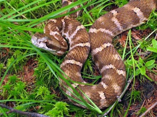 Как избавиться от змей на участке?