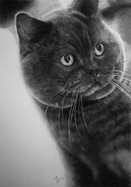 Это рисунки, выполненные обыкновенным карадашом картины карандашом, коты, рисунок, художник