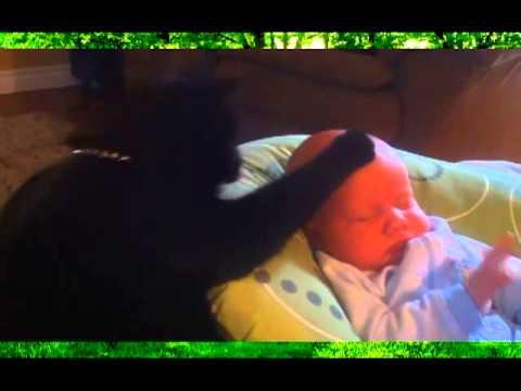 Кот укладывает малыша спать