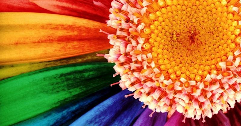 Мнение психологов: скажи мне свой любимый цвет, и я скажу, кто ты.