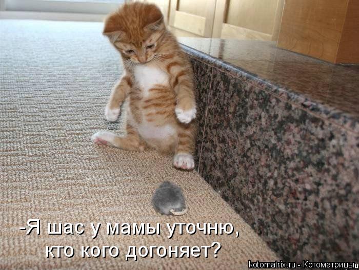 Котоматрица: -Я шас у мамы уточню, кто кого догоняет?