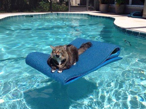 Смешные стоп-кадры с кошками…