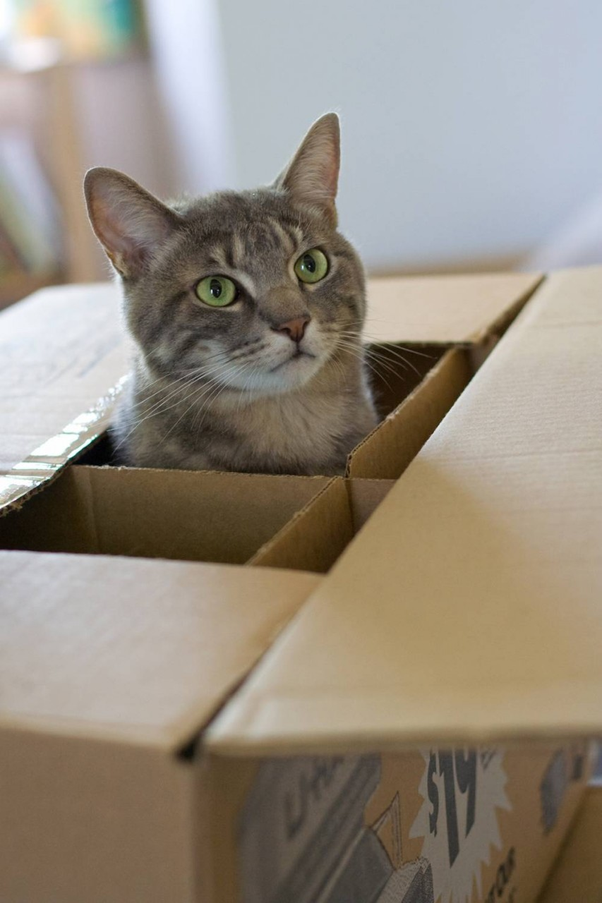 Переезд с кошкой: будь как дома!