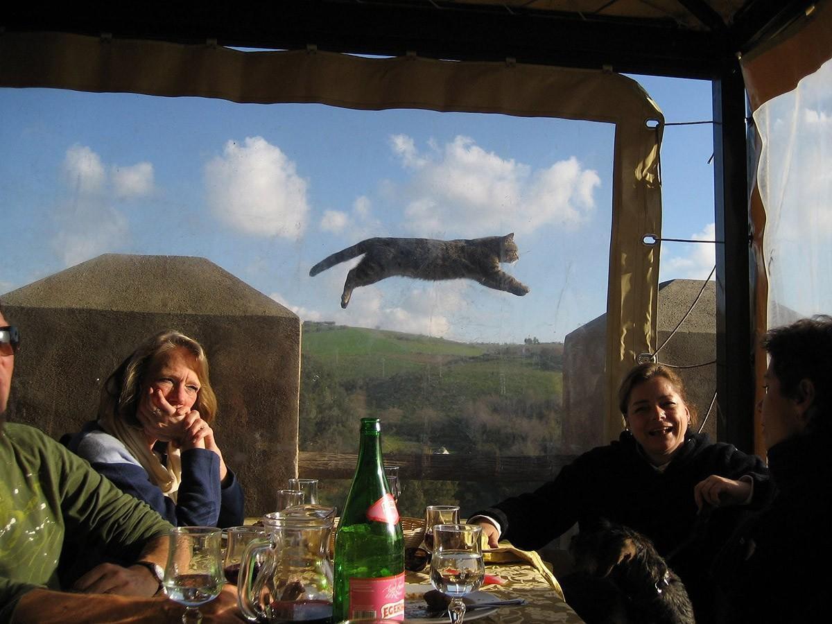 lolcats53 100 лучших фотографий кошек всех времен и народов