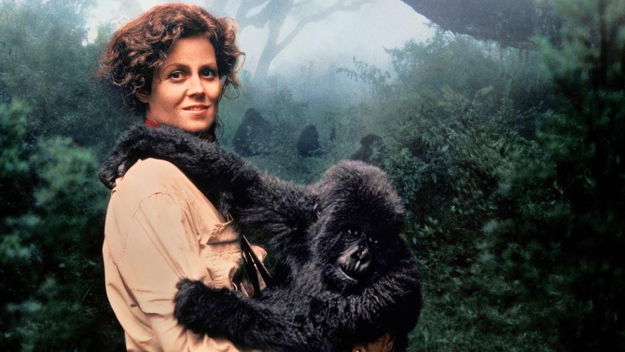 фильм про белых горилл убийц