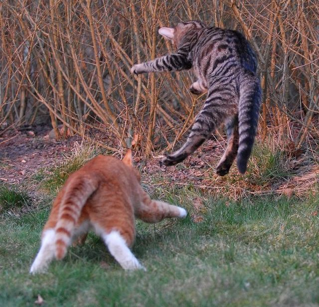 cat_flying_fight_14