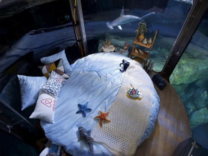 Провести ночь в окружении ак…