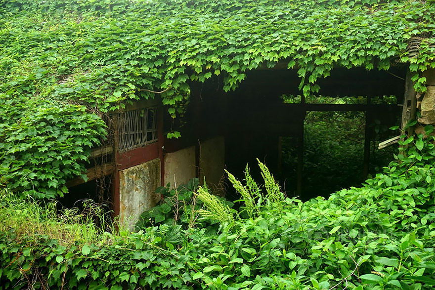 Зеленая деревушка в Китае деревня, зелень, китай