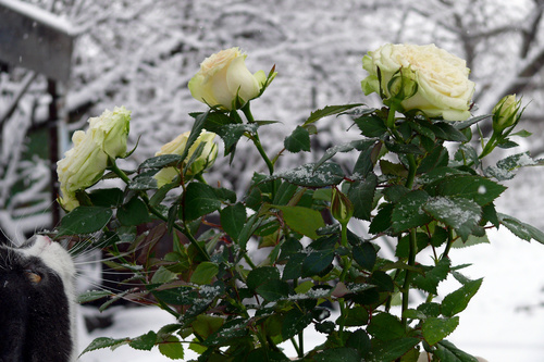 Фото цветов на морозе