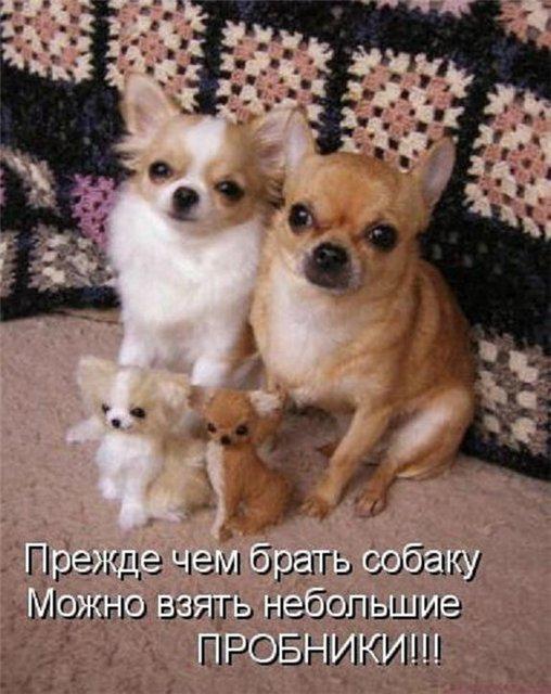 Тайная жизнь наших питомцев)