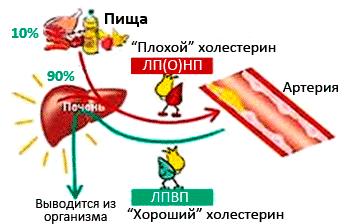 почему высокий холестерин yt ем жирное