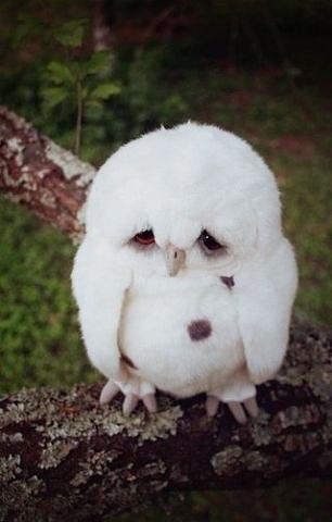 Вот, как на самом деле выглядит печалька :)