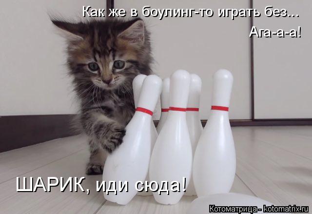 Котоматрица: Как же в боулинг-то играть без... Ага-а-а! ШАРИК, иди сюда!