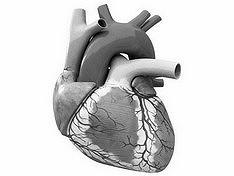 Британцы создали кардиостимулятор, подстраивающийся под дыхание пациента