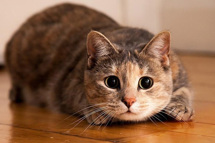 Есть ли риск заразиться от кошки?