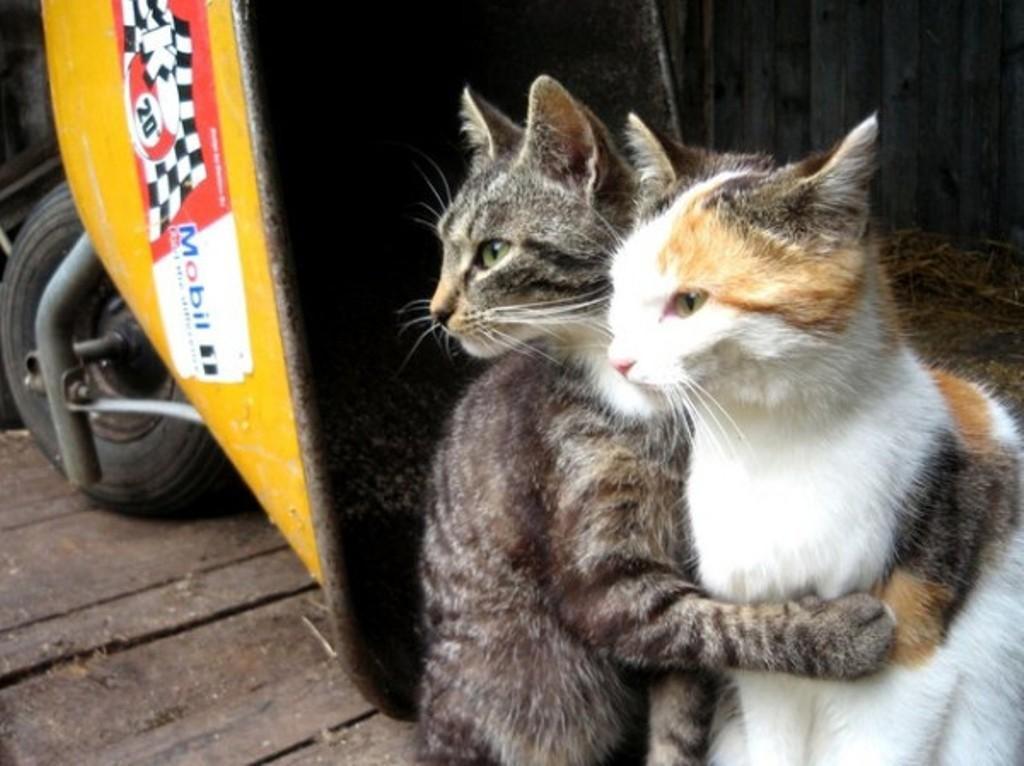lolcats49 100 лучших фотографий кошек всех времен и народов