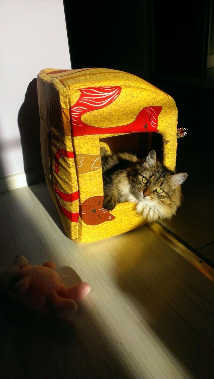 Про уличного кота коты, кошка