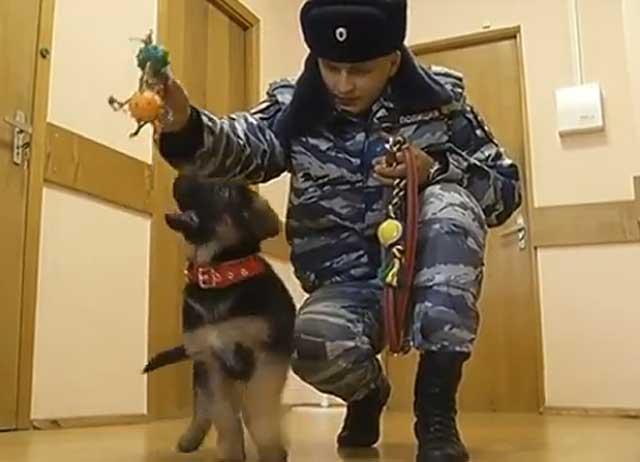 Щенок Добрыня ждет вступления в ряды французской полиции