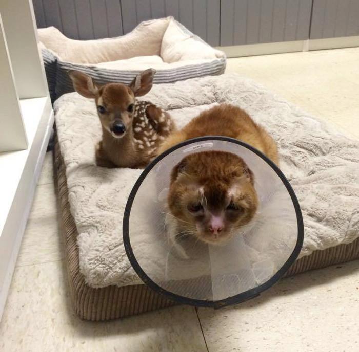 Спасенный кот заботится о животных