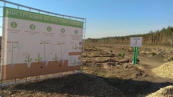 Мечи Колесова уже ждут участников. До начала акции «Наш лес. Посади свое дерево» осталось менее суток