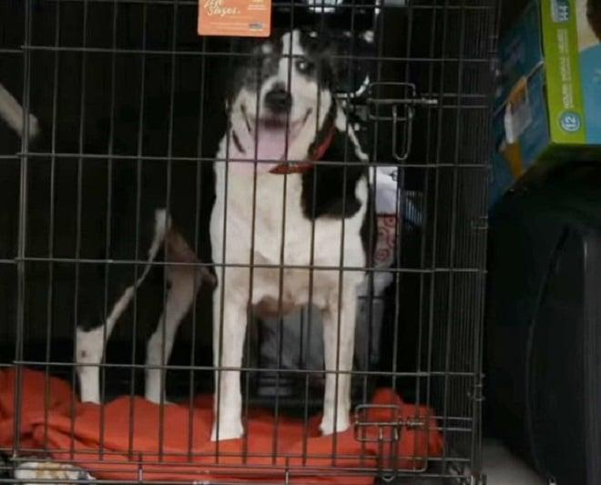После наводнения собаку считали погибшей, но однажды она нашлась