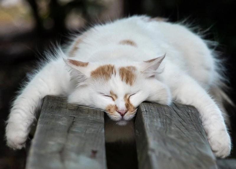 sleepingcats35 Коты, познавшие науку сна