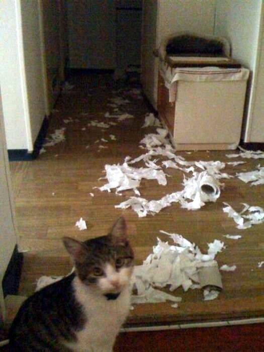 Коты- преступники животные, юмор