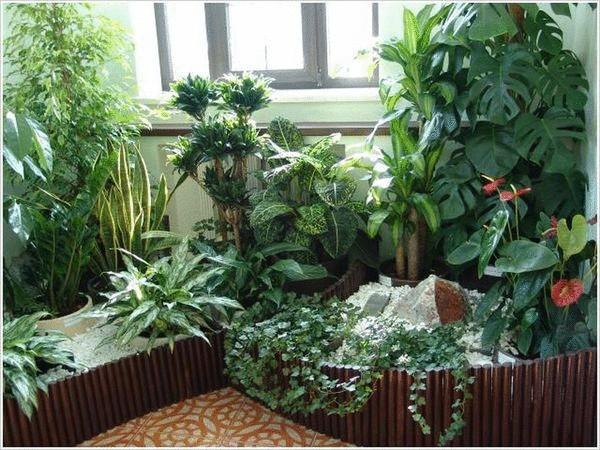 мини- сад в гостиной