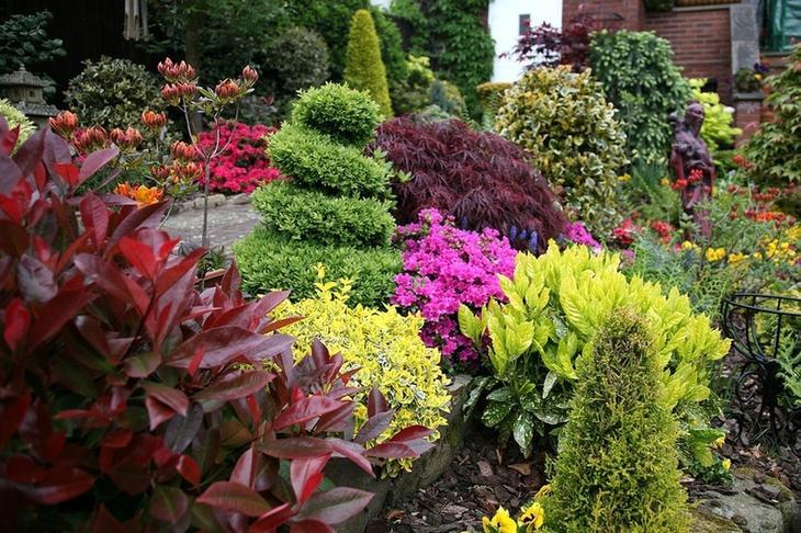Вечнозеленые растения для озеленения сада: лето на участке круглый год