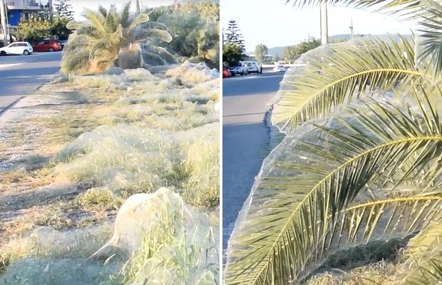 Загадочная гигантская паутина покрыла пляжи в Греции