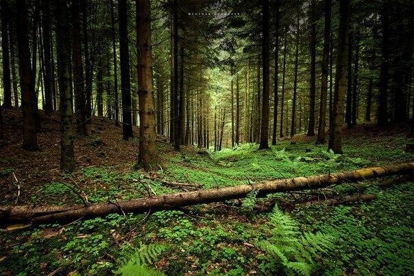 Ночевка в лесу для начинающих