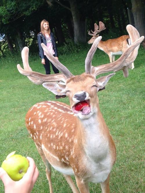 Фотографии животных, которые точно поднимут вам настроение