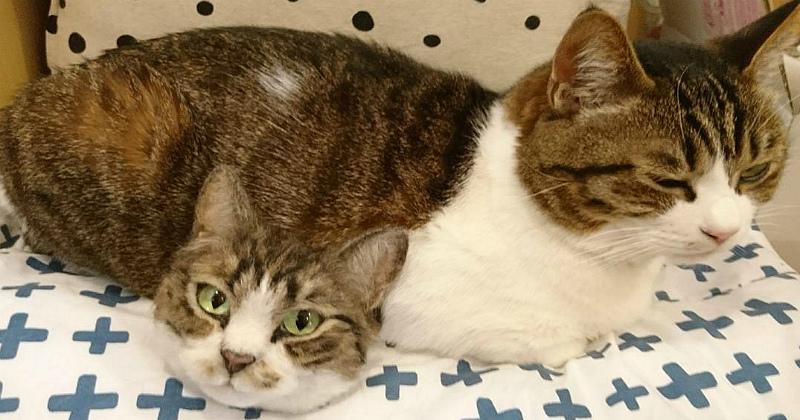 Тайна двухголового кота и другие чудеса японской мастерицы