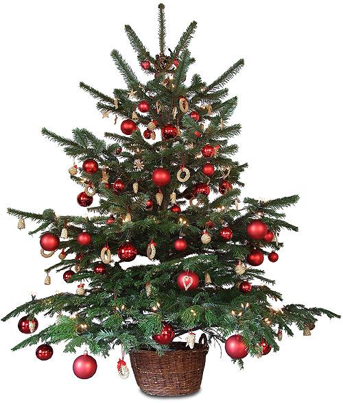 Как продлить жизнь новогодней ёлке