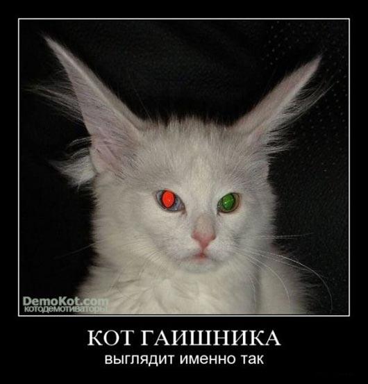 кот гаишника
