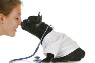 Ученые научили собак диагностировать рак щитовидки по запаху мочи больного