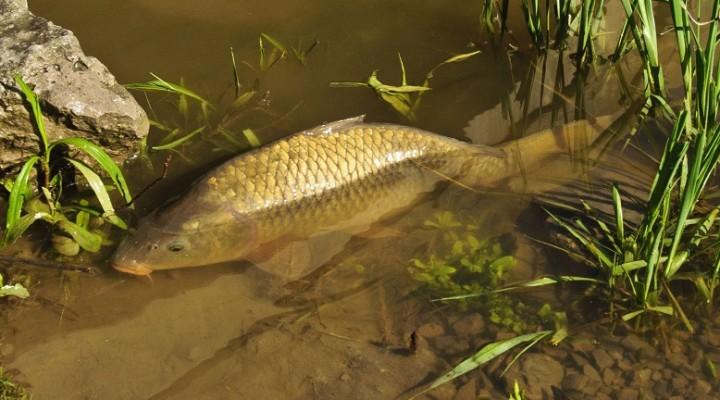 где клюет рыба в челябинской области сейчас