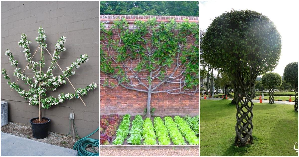 Креативный подход к формированию плодовых деревьев и кустарников