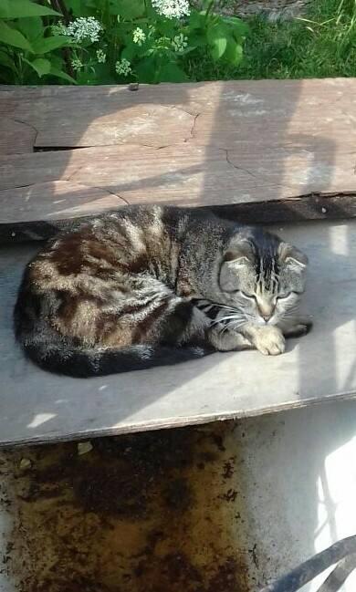 Москва и МО. Ослепла женщина, ее забрали к себе чужие люди, а кошек оставили на улице. Они погибают...
